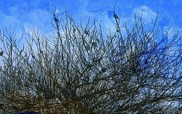 Vögel im singenden Busch von Anita Snik-Broeken
