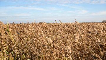 Niederländische Landschaft an einem sonnigen Herbsttag von Suzanne Fotografie