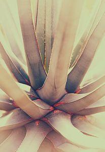 cactus van Marieke Bakker
