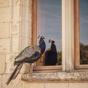 Weerspiegeling van trotse pauw in vensterglas van Petra Cremers