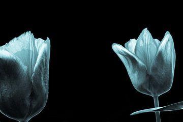 kalte Tulpen von Frank Ketelaar