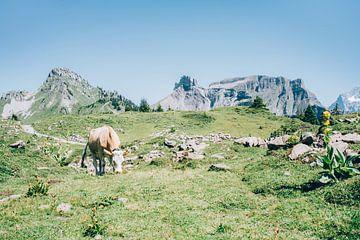 Kuh in den Alpen von Patrycja Polechonska