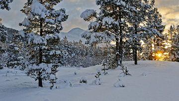 Norwegen, Sonnenaufgang von Michael Schreier