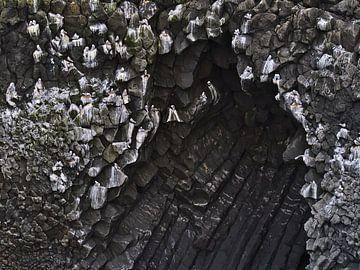 Eissturmvögel an der Steilküste von Timon Schneider