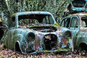 Langsam erlangt die Natur wieder Besitz von den Rohstoffen, aus denen diese Autos gebaut werden.