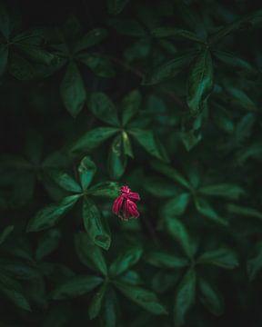 Die kleine rote Blume von Jakub Wencek