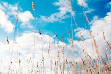 Gras met lucht van YesItsRobin