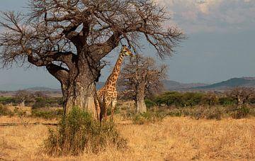 giraf van anja voorn