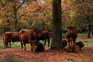 Koeien in de wei van Elly van Veen