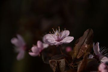 Teer en roze von Yvonne van der Meij