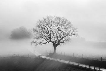 Alte Eiche im Winternebel von Yvonne Albe