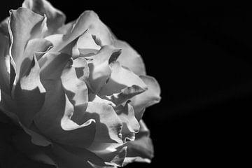 Zon in de roos - zwart- wit van Judith Snel