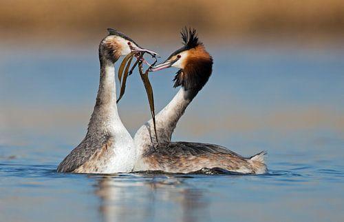 Love birds van