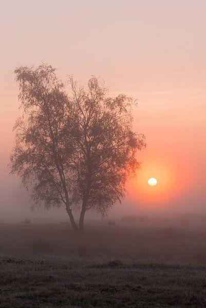Strabrechtse Heide 266 van Desh amer
