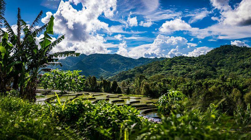 Rijstveld Indonesie, ricefields Indonesia van Corrine Ponsen