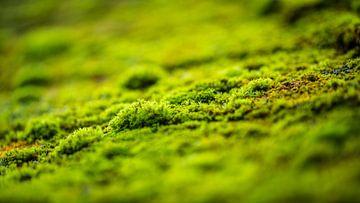 Moss van videomundum