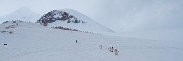de afdaling van de berg, pinguïns op weg naar zee van Eric de Haan