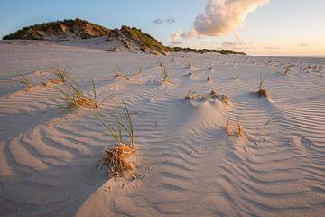 Spuren im Sand von Jarno van Bussel