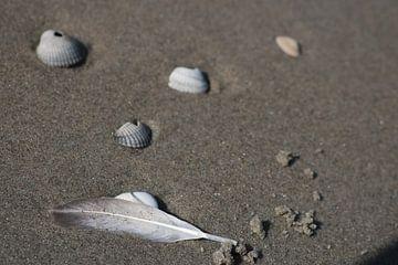 schelpen en veer op het strand