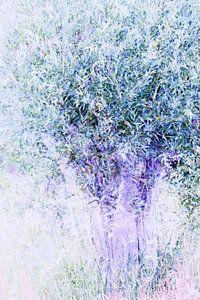 Droom boom van