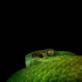 Groene slang van Hennie Zeij