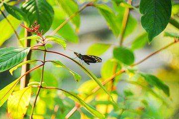 Vlinder von Jamy Danen