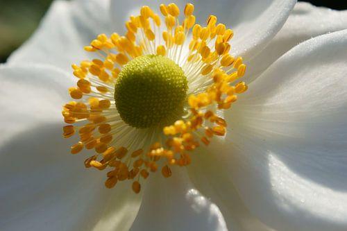 Hart van de bloem
