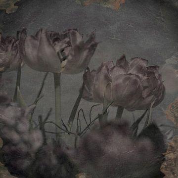 Lila tulpen van arjan doornbos