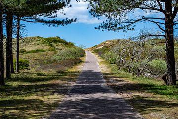 Der Weg zum Strand von Mandy Metz