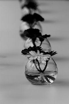 Ausgerichtete Blumen von Youri Mahieu