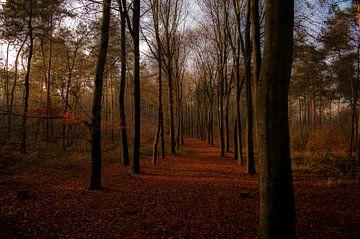 Gouden bospad van Jan Diepeveen