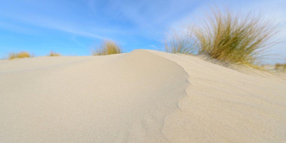 Zandduinen op het strand van Schiermonnikoog van Sjoerd van der Wal