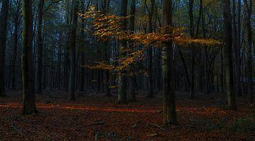 Le fil rouge de la lumière à travers la forêt sur Joris Pannemans - Loris Photography