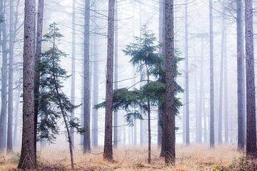 Brouillard dans la forêt d'épinettes sur Francis Dost
