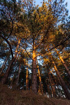 Hoge bomen onder een blauwe lucht von Bernadet Gribnau