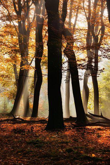 Het bos van de dansende bomen