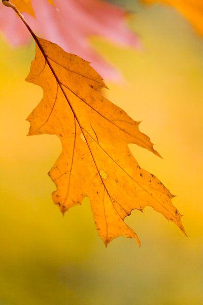 Herfstblad in het geel van Ron ter Burg