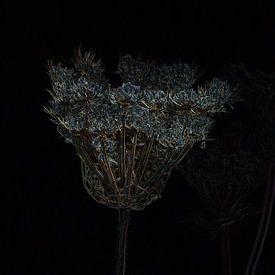 Gedroogde bloemen die glinsteren als kristal en goud van FotoGraaG Hanneke