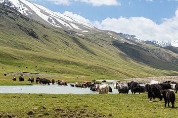Überquerung von Yaks von Peter Wierda