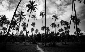 Palmbomen contrast in Frans Polynesië - Zwart wit reisfotografie van Freya Broos