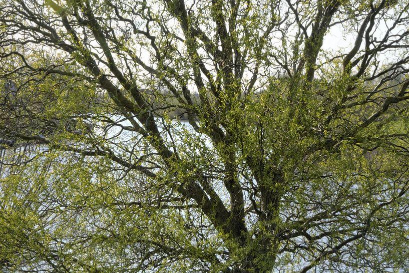 Ontluikend lentegroen van A'da de Bruin