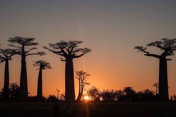 Baobab, Madagaskar van Renske Crutzen