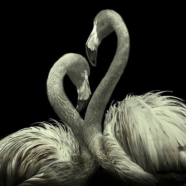 Flamingo Duo van Fons Bitter