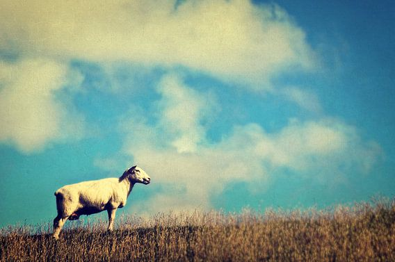 It's a sheep van Angela Dölling