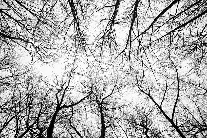 Kahle Bäume von Rik Verslype