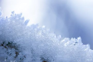 macrofoto van sneeuw en rijp in de natuur in Drenthe van Karijn Seldam