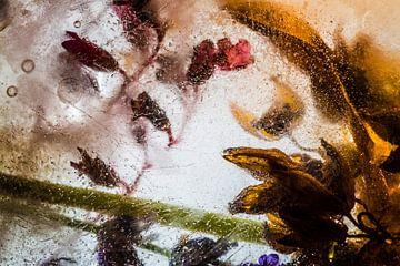 IJsbloemen 1 van Wim Roebroek