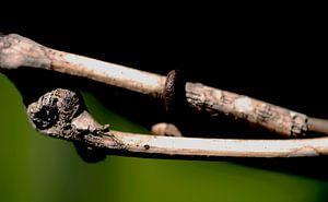 Hölzerner Zweig mit Rost