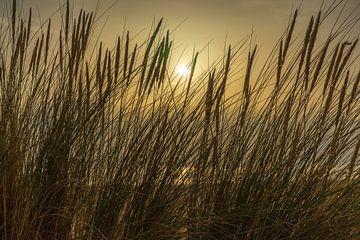 Sonnenlicht durch das Strandhafergras von Leo Luijten