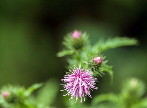 Close-up van een net ontluikende plant.